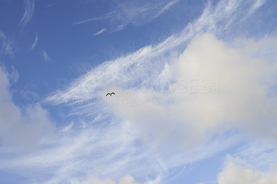 Seagull flying - blue sky and clouds