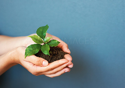 Buy stock photo Hands holding green plant on blue background