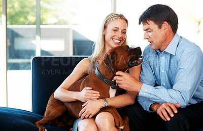 Buy stock photo Portrait of a smiling young couple sitting on sofa with their dogs at home - Indoor. Boxer