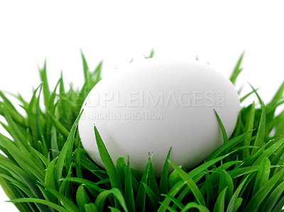 Buy stock photo Closeup image of one white egg on green grass bush