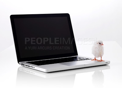 Buy stock photo One small chicken on laptop isolated on white background