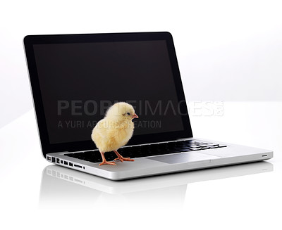 Buy stock photo Cute small chicken on laptop isolated over white background
