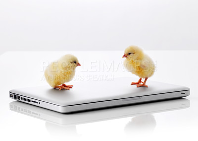 Buy stock photo Two small chicks on laptop computer isolated over white background