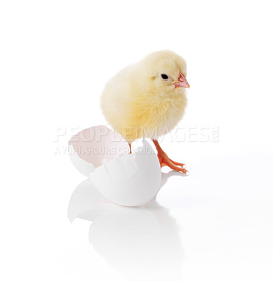 Buy stock photo Little easter chick and egg shell isolated on white background
