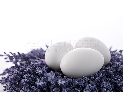 Buy stock photo Three fresh white eggs on a bunch of lavender flowers against white background