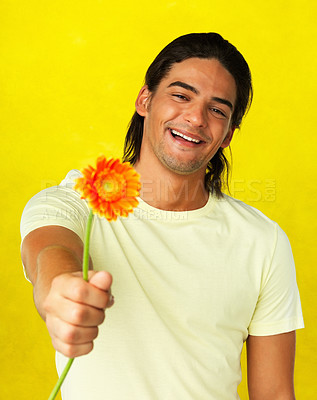 Buy stock photo Attractive man holding out daisy against yellow background