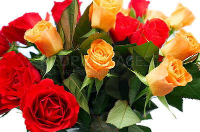 Buy stock photo Isolated boquet of colorful roses on a white background
