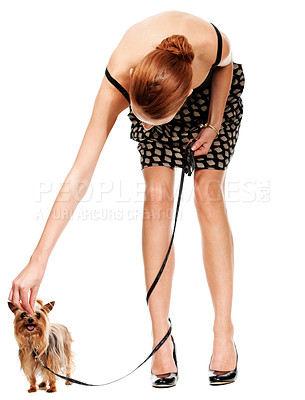 Buy stock photo A young woman bending over to pet or tiny Yorkshire terrier