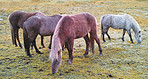 A photo of horses eating in autumn
