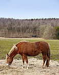 Beautiful brown horse outdoors in the daytime