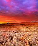 A photo of the countryside at sunset