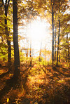 A photo a Autumn forest and sun