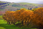 a photo of Autumn landscape in New Zealand