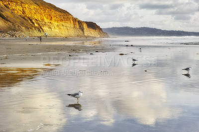 Buy stock photo Torrey Pines Beach, San Diego, Callifornia [please include the above in the title]