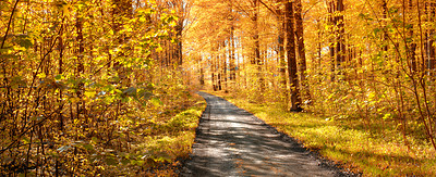 Buy stock photo A photo of autumn leaves and trees