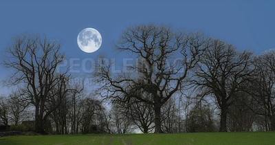 Buy stock photo A shot of forest trees