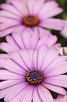 A very sharp and detailed photo of Natural purple flowers closeup