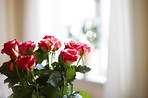 A photo of Roses indoor with window as background
