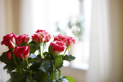 Buy stock photo A photo of Roses indoor with window as background