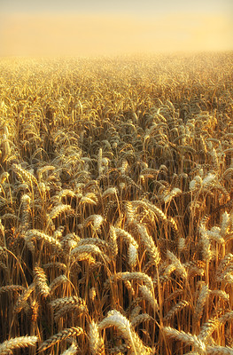 Buy stock photo Time for harvest - early moring at the countryside