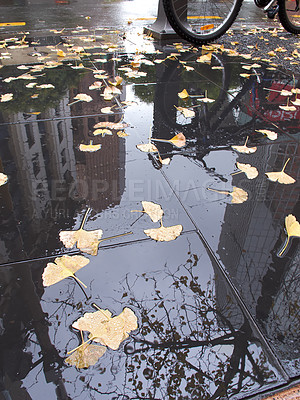Buy stock photo A photo of Autumn leaves in the city a rainy day