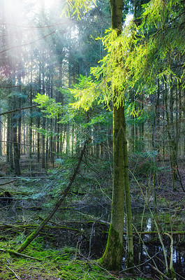 Buy stock photo Cropped shot of a huge forest