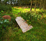 Footbridge to the forest