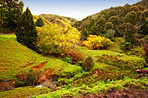 Scenic autumn valley in the New Zealand landscape