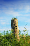 Solitary fencepost