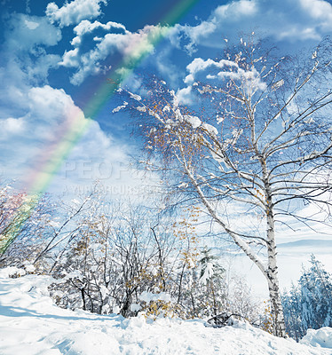 Buy stock photo Shot of a beautiful rainbow over a forest during winter