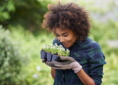 Buy stock photo Shot of a happy young woman holding a tray of seedlings for the garden