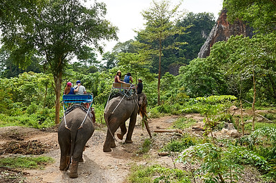 Buy stock photo Shot of tourists on an elephant ride through a tropical rainforest