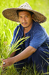 Rice farmer - Thailand