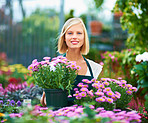 Plants can give your garden a splash of colour