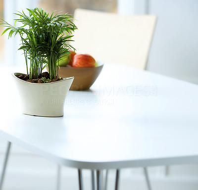 Buy stock photo Stylish shot of a classic interior, table, chair and plant.