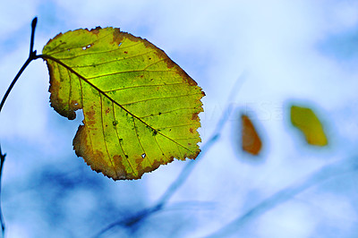 Buy stock photo Closeup of an autumn leaf