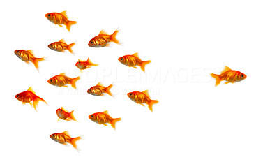 Buy stock photo High resolution image of bored goldfish. Due to the shear size of the shark that was supposed to be in this pictures, we had to leave it out. This pictures is great for symbolising anything where anyone stands out from the crowd.