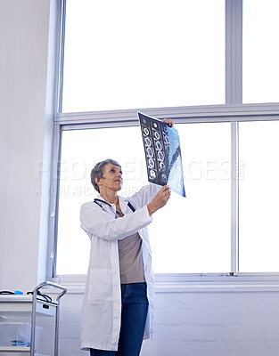 Buy stock photo Shot of a female doctor studying x-rays