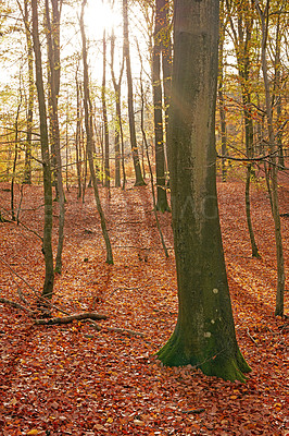 Buy stock photo The forest in the colors of autumn