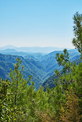 Buy stock photo An image of Pine forest in mountain area in Wester Turkey