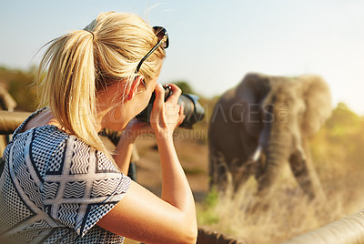 Buy stock photo Cropped shot of a female tourist taking photographs of elephants while on safari