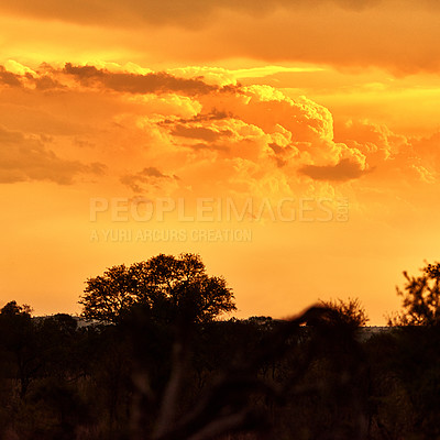 Buy stock photo Shot of the African bush at sunset