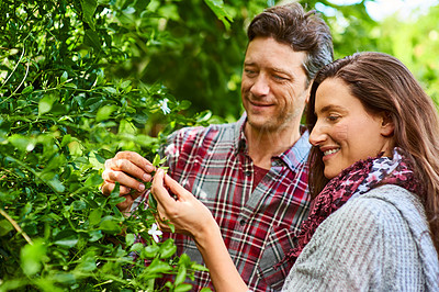 Buy stock photo Shot of a smiling couple standing in their organic garden