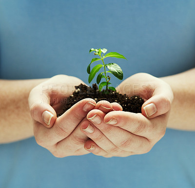 Buy stock photo Shot of hands holding a plant growing out of soil