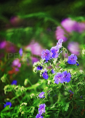 Buy stock photo A photo of the garden in summertime