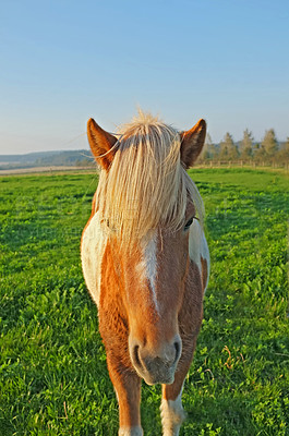 Buy stock photo A photo ofSmall horses on a field