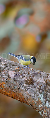 Buy stock photo The Great Tit - colorful autumn forest