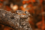 Sparrows in autumn - sitting in a tree