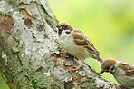 A tele photo of a sparrow