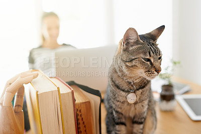 Buy stock photo Cropped shot of a cat sitting with its owner at home